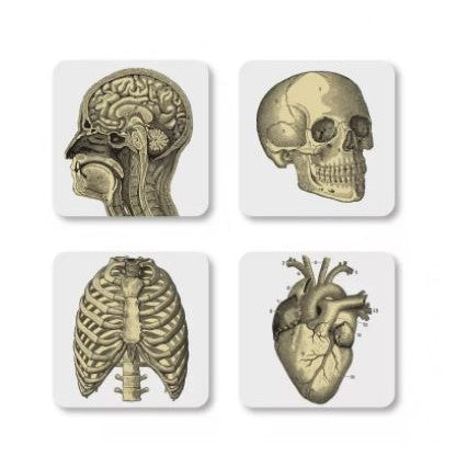 Biology coasters coasters cubic - Brand Academy Store