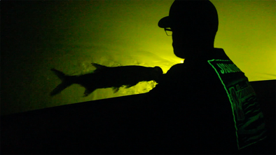 Tarpon, YouTube, Video, Jigalode, Fishing, Fly Fishing, Miami, Miami Beach, Government Cut, Downtown Miami, The Creature Tee, Glow In The Dark, Night, Dock Light, Underwater, Snook, Florida, Halloween