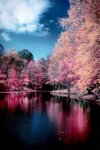 Pink Autumn Trees