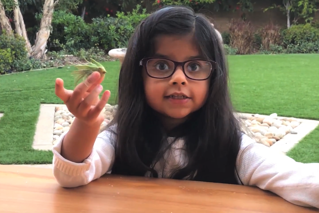 [Video] Air Plants: Explained By a 6-Year-Old