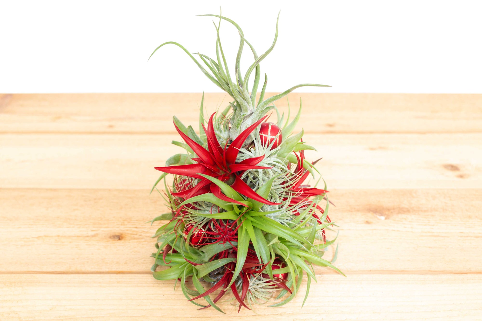 PRE-ORDER: 10 Inch Tall Miniature Handmade Air Plant Christmas Tree with 35 Living Tillandsias from AirPlantShop.com