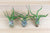 Wholesale: Tillandsia Bulbosa Guatemala Air Plants [Min Order 12]