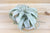 Tillandsia Xerographica - Large Size: 6 to 9 Inches Wide - The Queen of Air Plants [Single Plant]