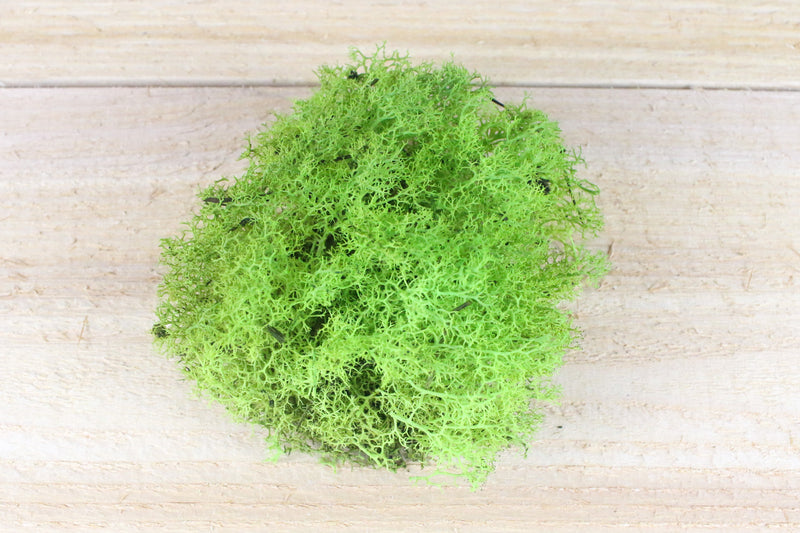 Chartreuse Reindeer Moss from AirPlantShop.com