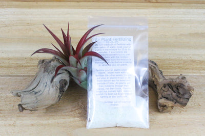 Grow More Air Plant Fertilizer / Plant Food - Small Packet - 1 Year Supply [1, 3 or 5 Pack] from AirPlantShop.com