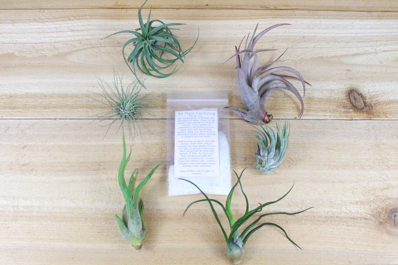 Wholesale: Grow More Tillandsia & Bromeliad Fertilizer Packets - Air Plant Food [Min Order 12] from AirPlantShop.com