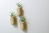 Wine Cork Planters with Air Plants - Set of three with magnets from AirPlantShop.com