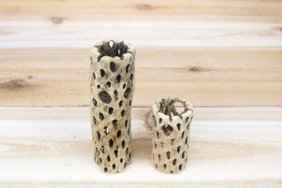Wholesale: Cholla Wood Containers - 3 Inches Tall [Min Order 12]