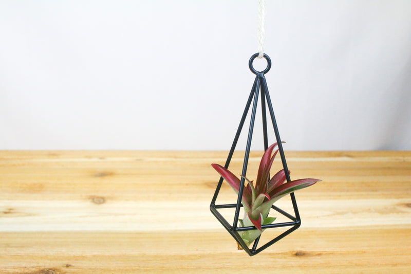 Wholesale: Hanging Geometric Metal Pendant for Tillandsia [Min Order 12]