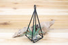 Hanging Geometric Metal Pendant with Assorted Small Air Plants
