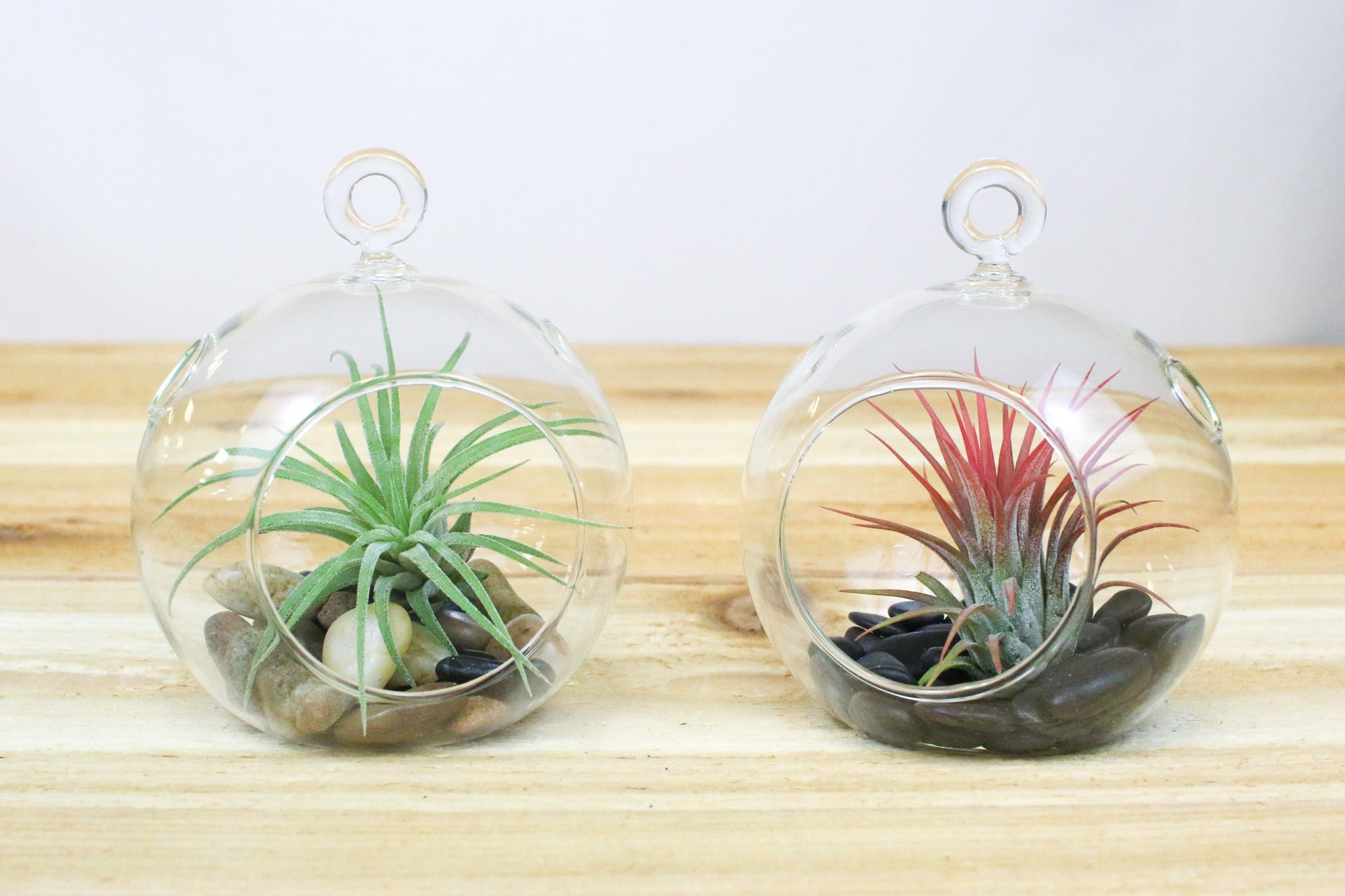 Hanging Glass Air Plant Terrarium with Flat Bottom - Includes Black Stones & Air Plant from AirPlantShop.com