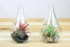 Wholesale: Teardrop Riverstone Terrarium with Air Plant [Min Order 12] from AirPlantShop.com