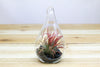 Air Plant Teardrop Terrarium with Black Stones & Air Plant