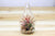 Air Plant Teardrop Terrarium with River Stones & Air Plant