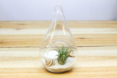 3 Complete Teardrop Beach Terrarium Kits with White and Black Sand and Sea Life from AirPlantShop.com