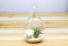 Air Plant Beach in a Teardrop - Includes glass terrarium, air plant, white sand & seashells