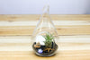 Air Plant Beach in a Teardrop - Includes Glass Terrarium, Air Plant, Black Sand & Seashells