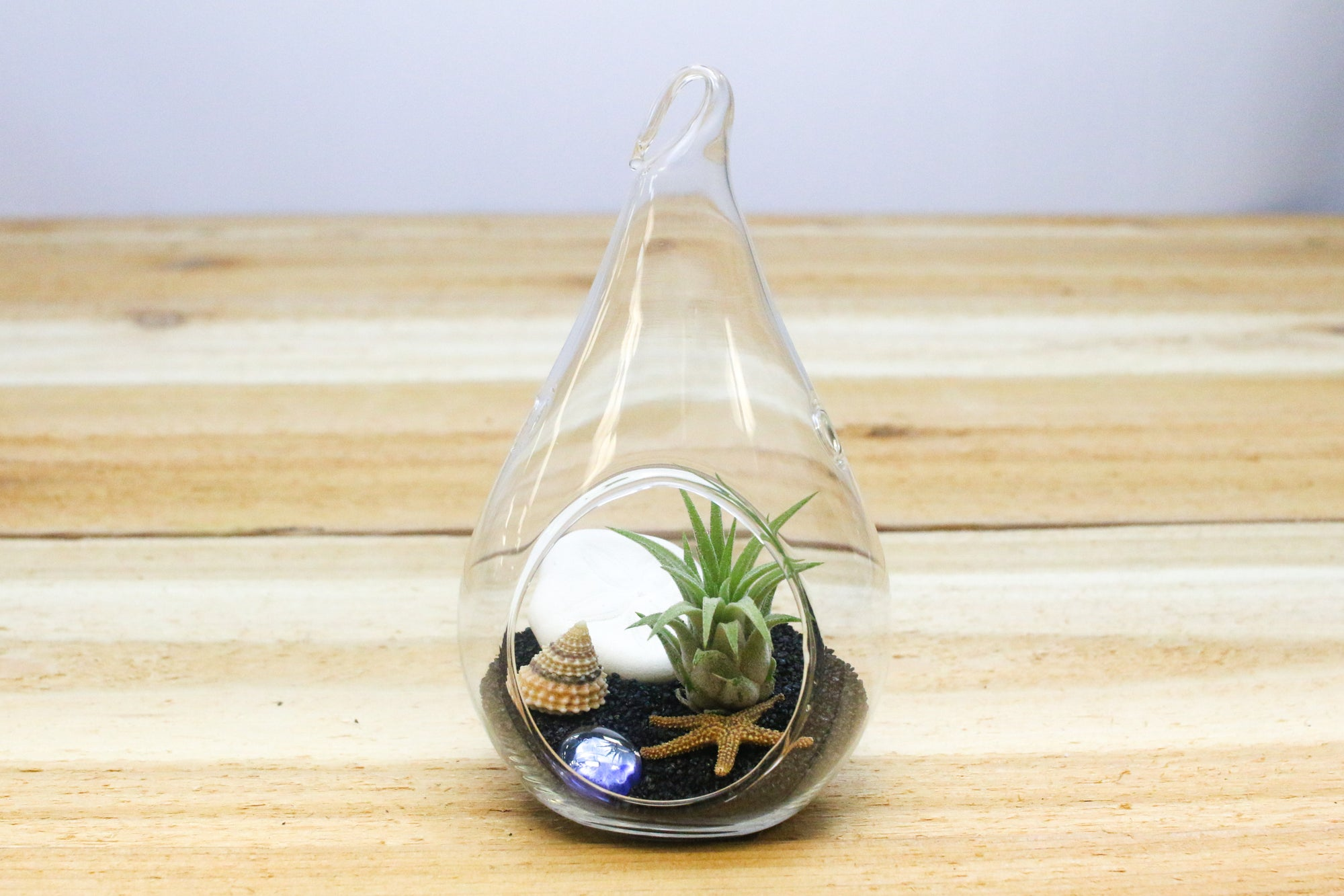 Wholesale: Teardrop Black Beach Terrarium with Air Plant [Min Order 12] from AirPlantShop.com