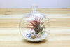 Hanging Beach Air Plant Terrarium with Flat Bottom - Includes White Sand, Shells, & Air Plant