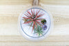 Wholesale: Pura Vida Terrarium with White Sand and Air Plant [Min Order 12]