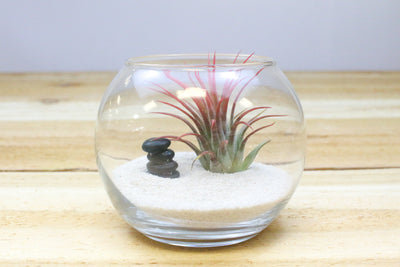 Zen Terrarium with Air Plant