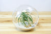 Large Beach Terrarium with Air Plant & White Sand