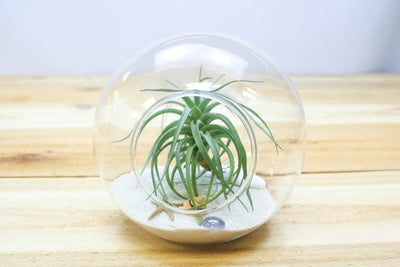 Wholesale: Terrarium with Open Ends [Min Order 12]