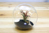 Large Beach Terrarium with Air Plant & Black Sand