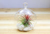 Rose Quartz Terrariums with Custom Air Plant in Flat Bottom Globe from AirPlantShop.com