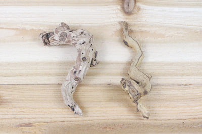 "Wholesale: ""Twig"" Size Sandblasted Grapewood Branch with 1 Air Plant [Min Order 12]"
