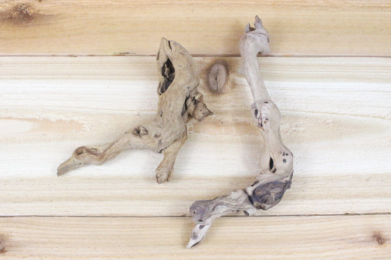 "Wholesale: ""Twig"" Size Sandblasted Grapewood Branch [Min Order 12] from AirPlantShop.com"