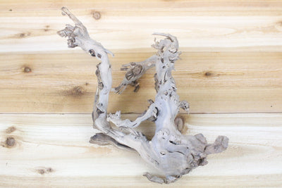 Wholesale: Medium Sandblasted Grapewood Branch with 4 Air Plants [Min Order 12]