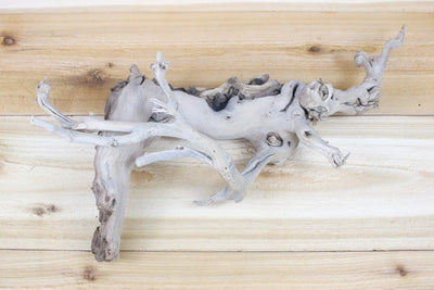 Wholesale: Large Sandblasted Grapewood Branch [Min Order 12] from AirPlantShop.com