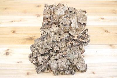 Large Cork Tree Bark with 5 Air Plants - 10 inch x 16 inch bark with five air plants and glue