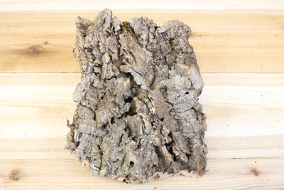 SALE: 40% Off [3 or 6 Pack] Medium Natural Cork Tree Bark with 3 Tillandsia Air Plants - Approximately 7 X 9 Inches with Glue from AirPlantShop.com