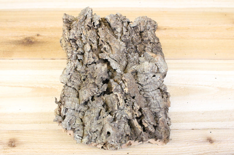 Virgin Cork Bark Slabs - E-6000 Glue Included - Perfect for Displaying Air Plants, Bromeliads & Orchids from AirPlantShop.com