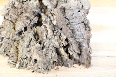 SALE: 40% Off [3 or 6 Pack] Large Natural Cork Tree Bark with 5 Tillandsia Air Plants - Approximately 10 X 16 Inches with Glue