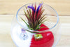 Snowman Bubble Terrarium - Spread Air Plant Cheer!