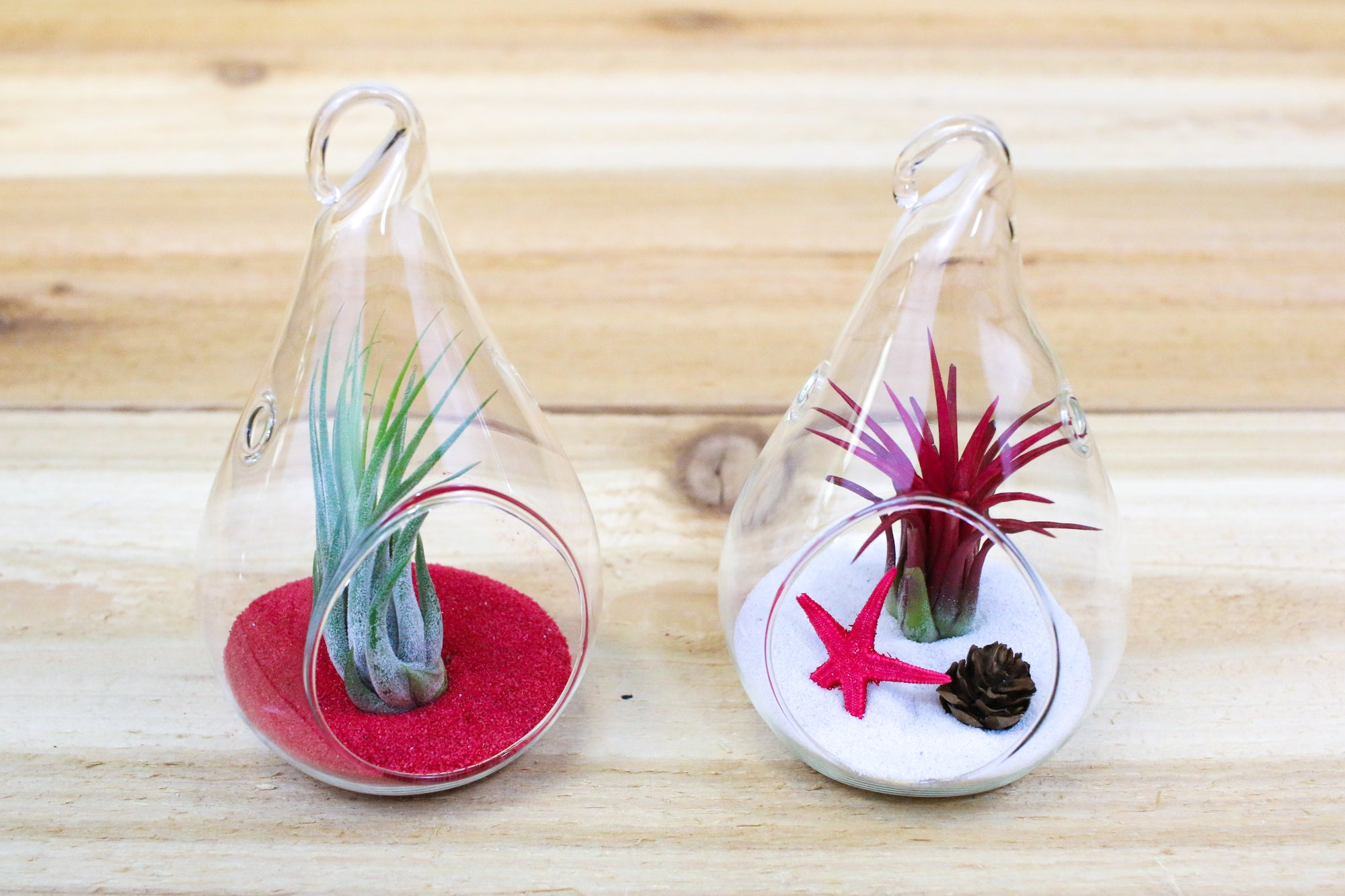 Holiday Teardop Set - Super Cute set of Two Cheerful Terrariums