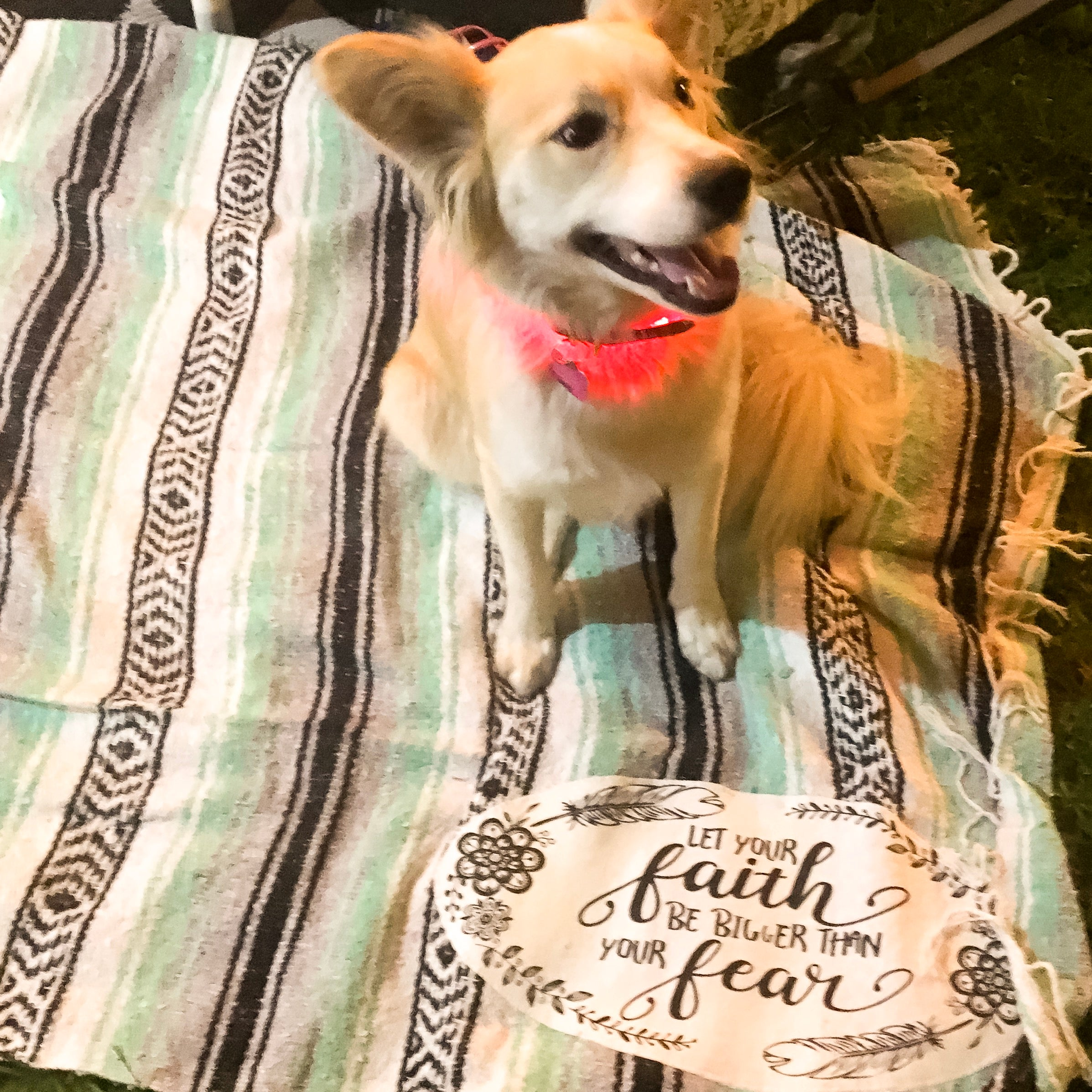 Cute dog on faith mexican blanket