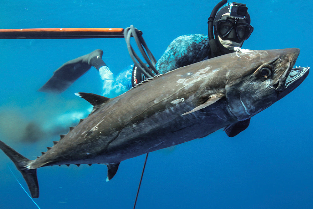 Spearfishing Hunting Tips