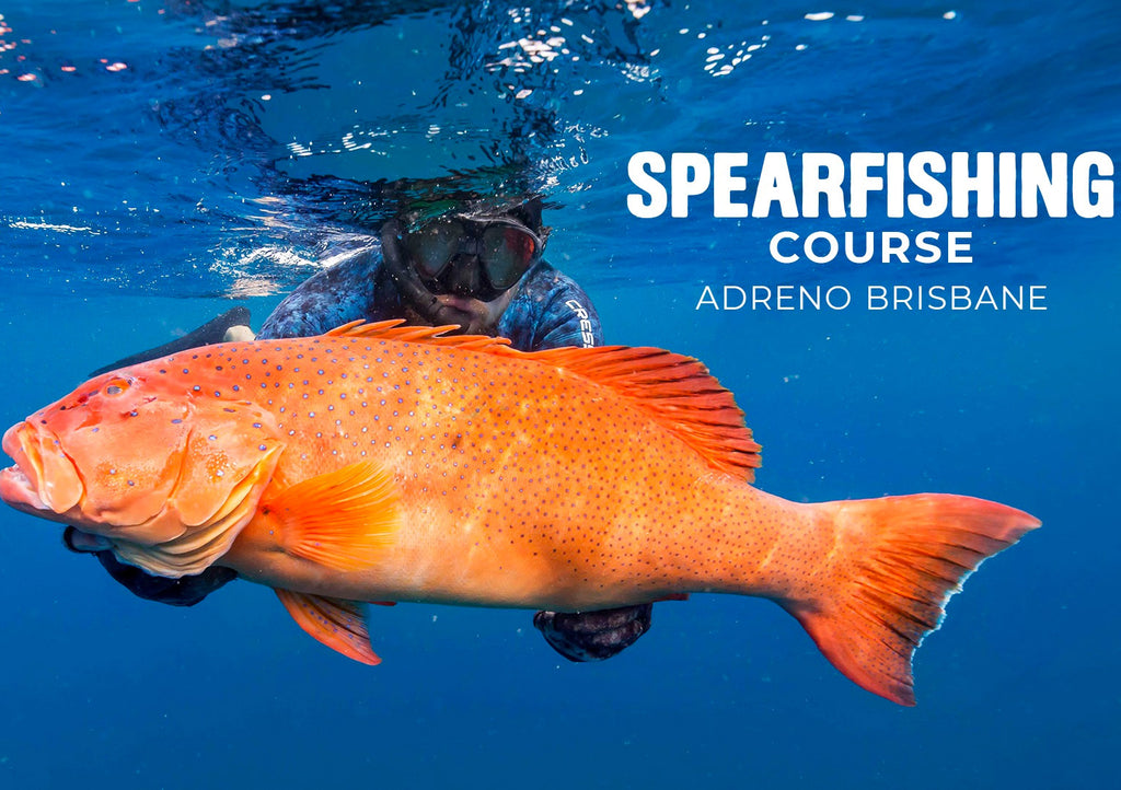 Adreno Spearfishing Course - Level 1 Theory