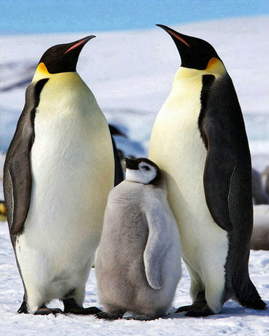 Penguins Family - TryPaint