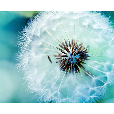 Beautiful Dandelion Flower - TryPaint