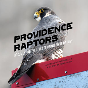 Providence Raptors: Documenting The Lives of Urban Birds of Prey