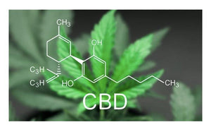 2020 Best CBD Information Article