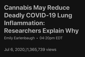 Cannabis CBD May Help Fight Against Covid