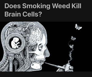 A Duke University Study Reports -  Smoking Weed Does Not Kill Brain Cells