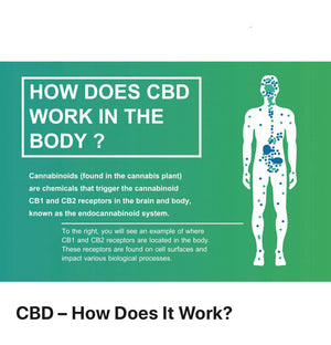 CBD 101 - Everything You Need To Know!