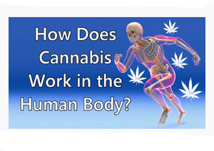 How Nature Planned Your Body to Use Cannabinoids.